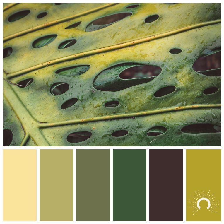 Color Palette Color Combination Color Combo Farbpalette Hue Yellow Green Green Yellow Red Color Palette Yellow Brown Color Schemes Brown Color Palette