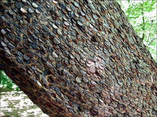 Do you know about the real money tree | Money trees, Tree, Money from home