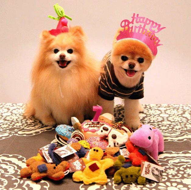 Verjaardag Dieren おしゃれまとめの人気アイデア Pinterest Petra Eleveld Weghorst 犬 かわいい お祝い