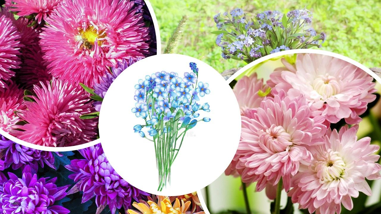 Vibrant and Subtle September Birth Flowers to Bring a
