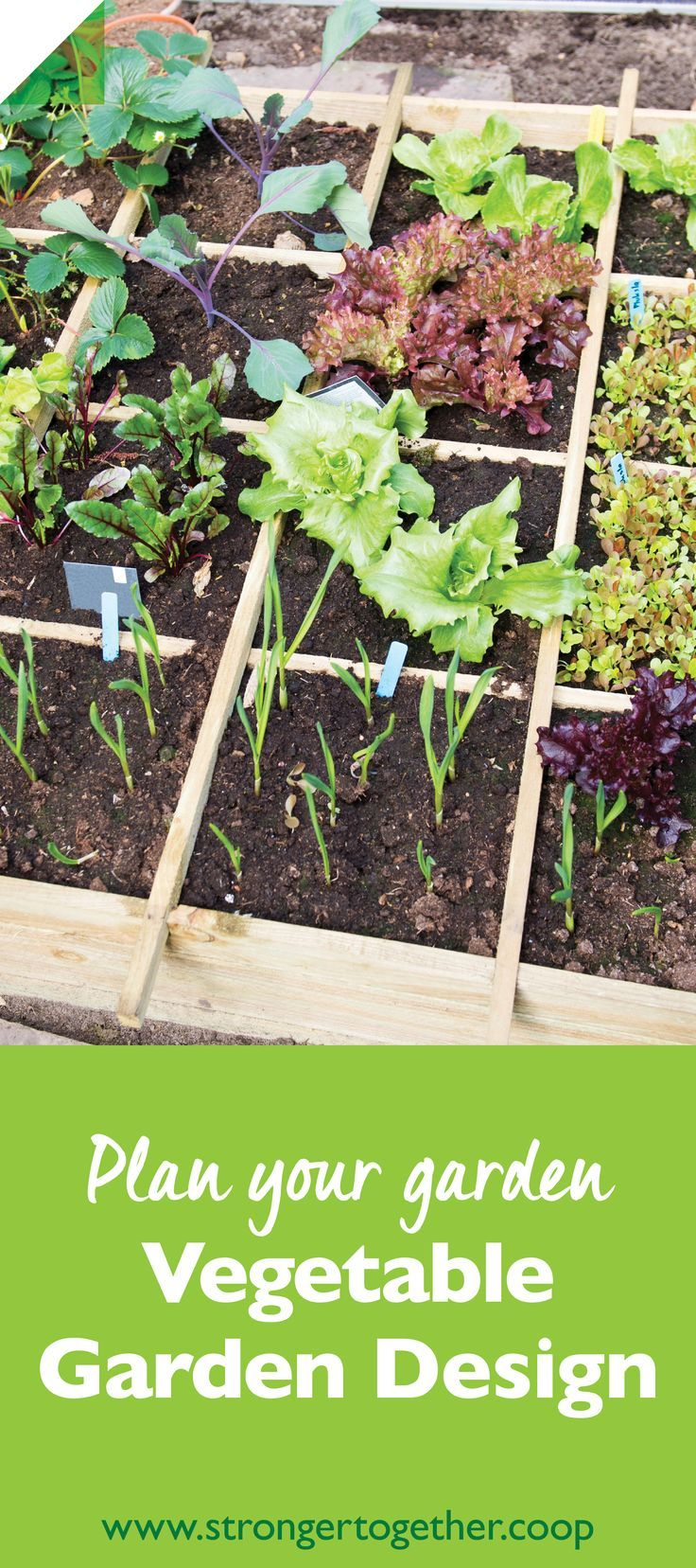 How much sun will your garden need how big should it be what should you plant these and other for How much sun does a garden need