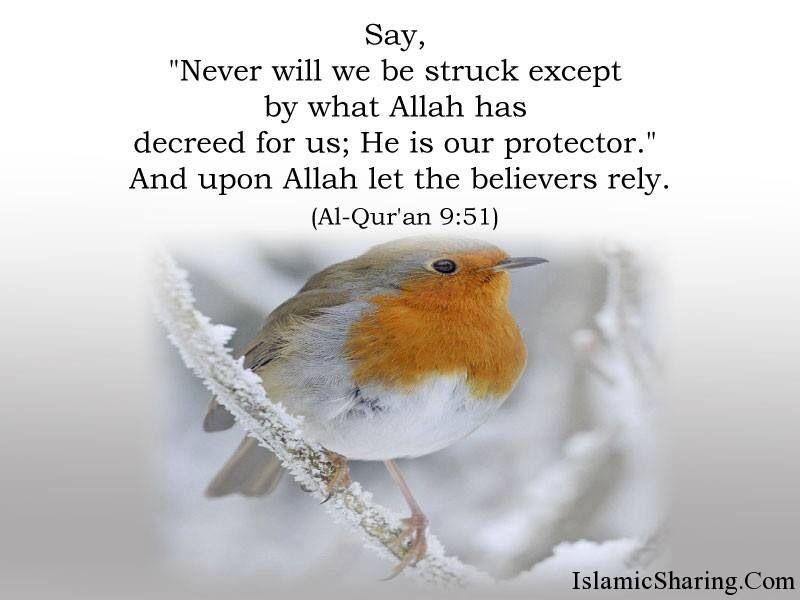 "Qur'an At-Tawbah (The Repentance) 9:51:   Say, ""Never will we be struck except by what Allah has decreed for us; He is our protector."" And upon Allah let the believers rely."