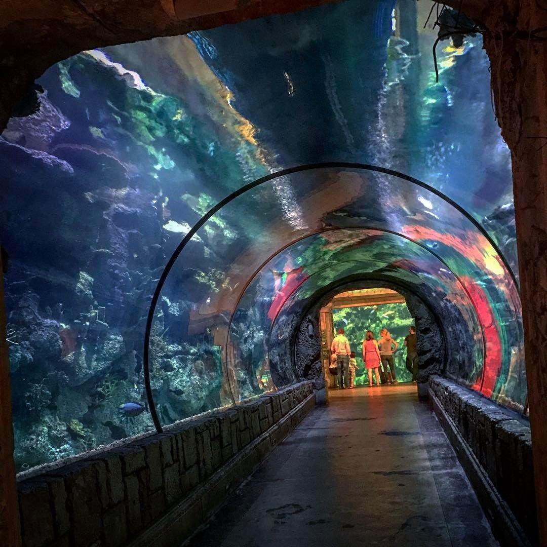 Shark Reef Aquarium At Mandalay Bay Las Vegas Nv
