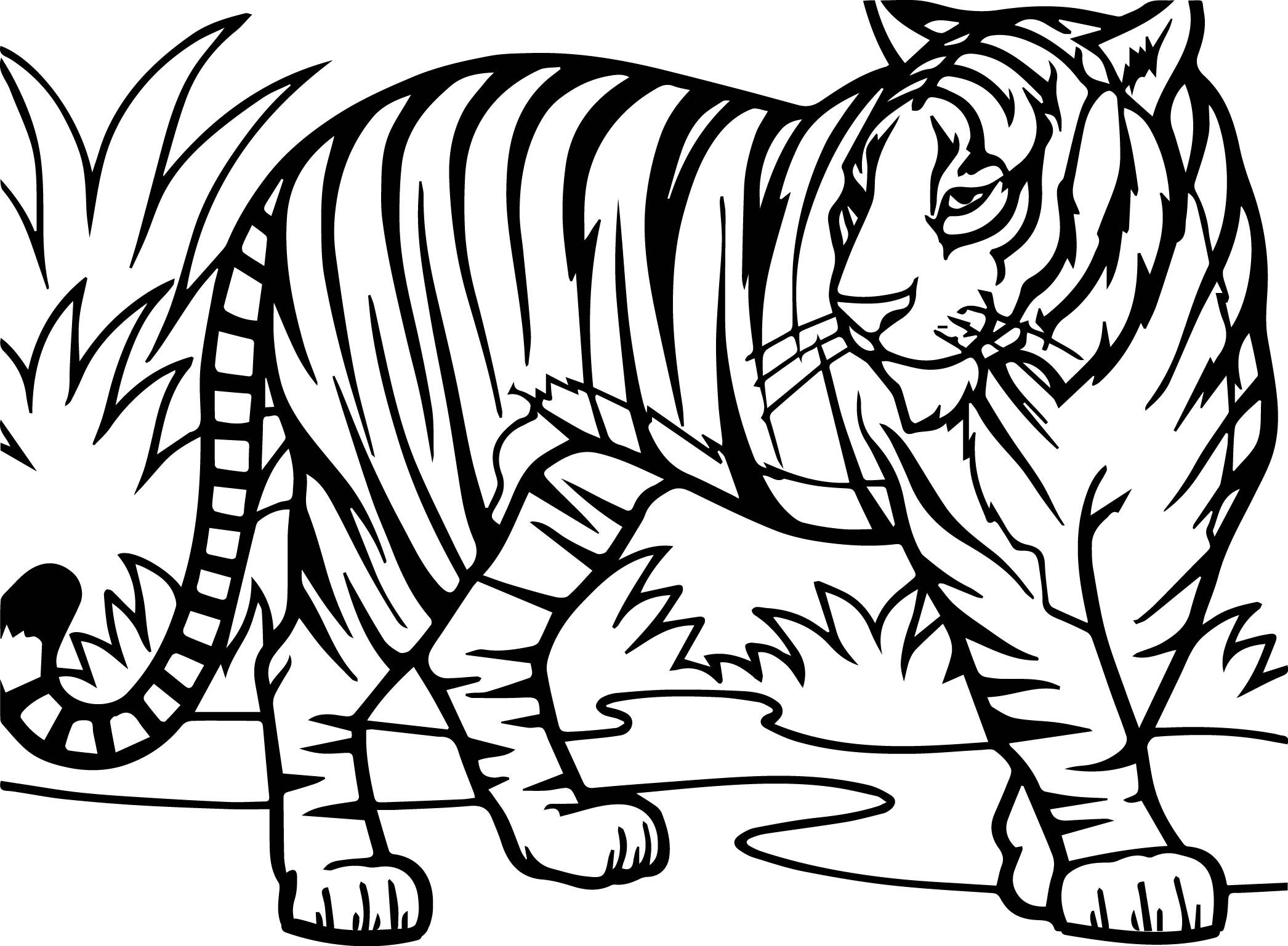 Tiger Coloring Pages Ideas With Awesome Pattern Tiger Drawing