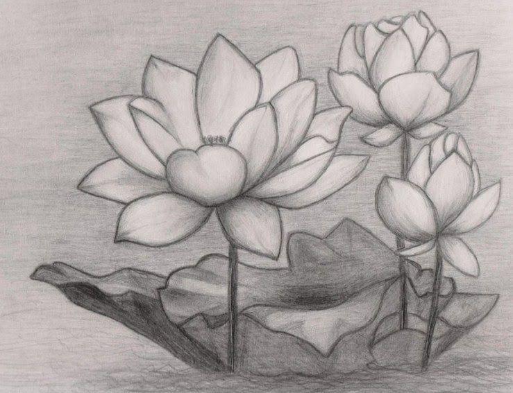 29 Lukisan Bunga Mawar 3d 39 Gambar Sketsa Bunga Indah Sakura Mawar Melati Download 11 Flower Drawing Flower Drawings With Color Beautiful Flower Drawings