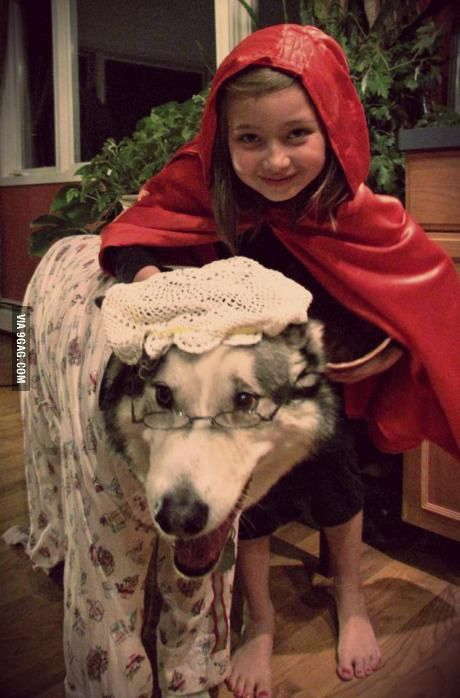 Malamute Cosplay Funny Animal Pictures Funny Animals Pet Costumes