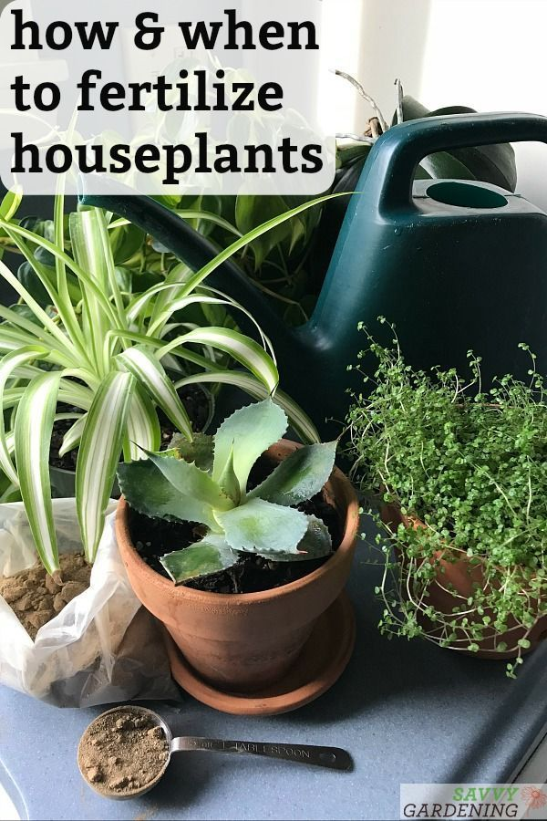 Houseplant Fertilizer Basics How And When To Feed 400 x 300