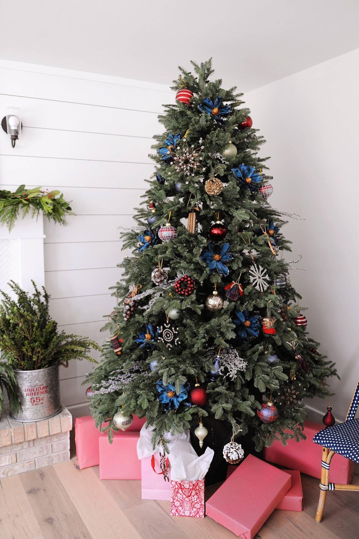 Bh Balsam Fir 8482 With Images Balsam Fir Christmas Tree