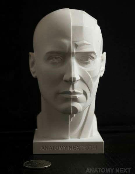 Pin de Carlos Maini en Anatomia | Pinterest | Anatomía, Escultura y ...