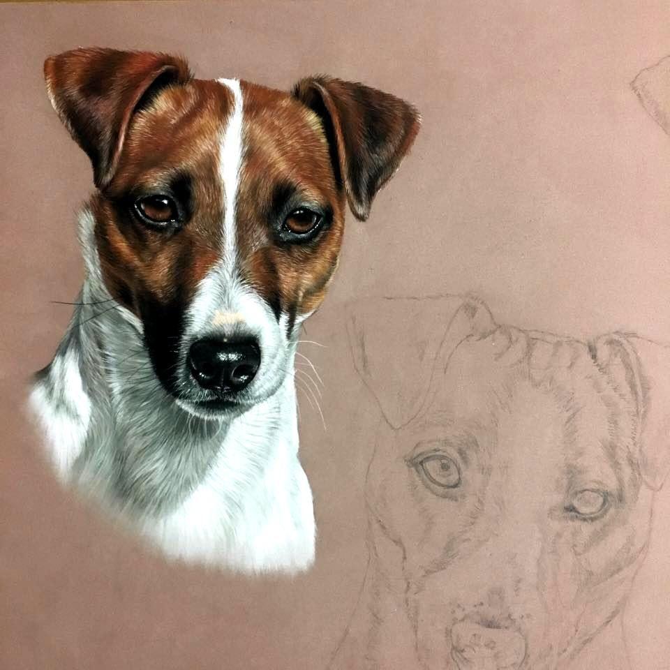 Marion Tubiana Arte Del Perro Retratos De Mascotas Dibujo De Perro