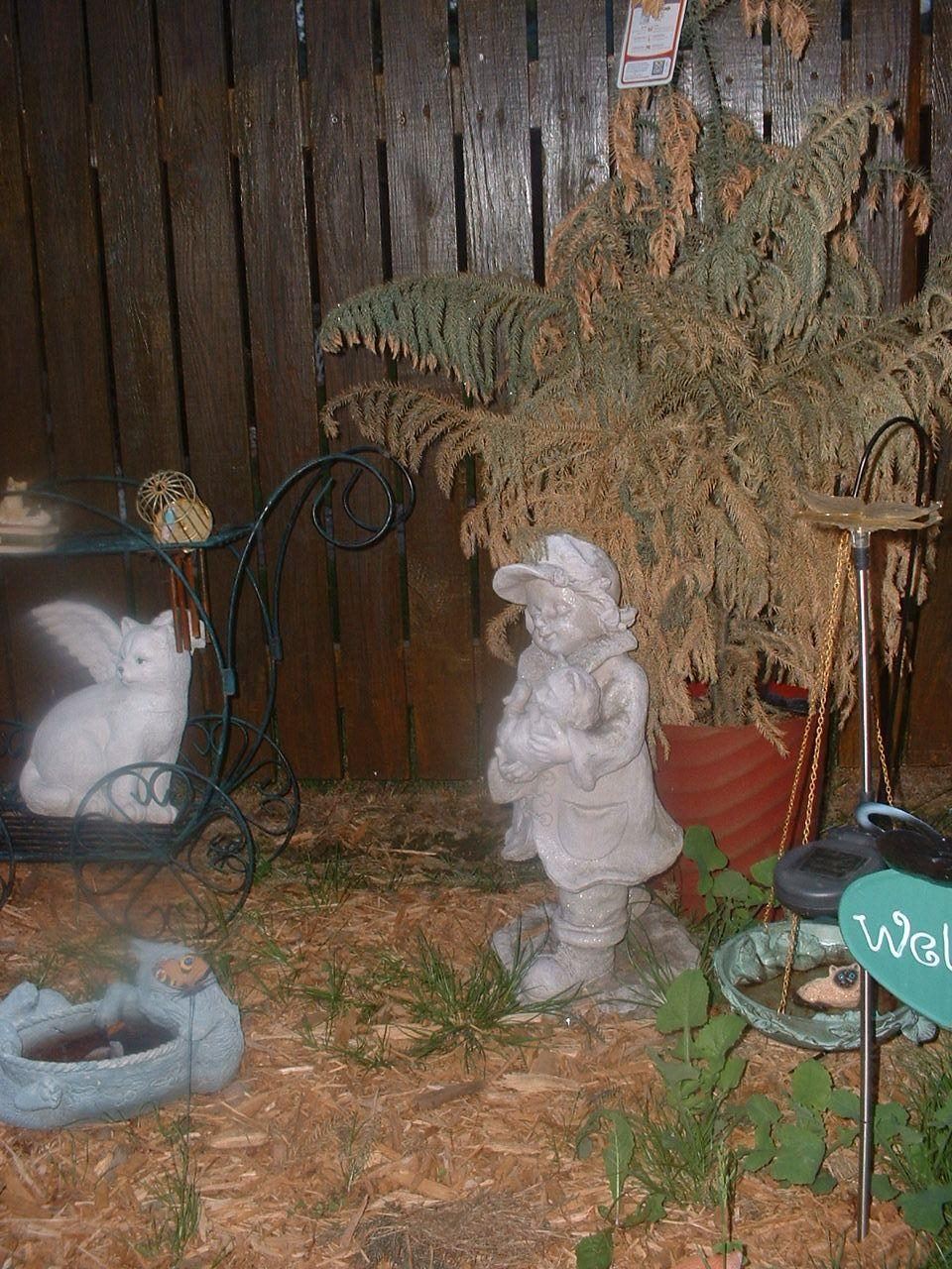 mom\'s cat Garden | My pictures | Pinterest | Cat garden