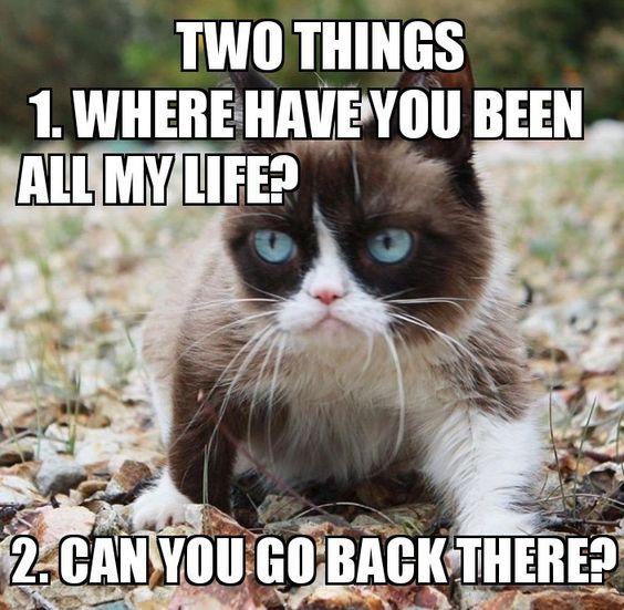 Super Funny Cat Memes 70 Pics Funny Cat Memes Memes Funny Cat Cat Memes Funny Cat Bongo Cat Memes B Funny Grumpy Cat Memes Grumpy Cat Quotes Grumpy Cat Humor