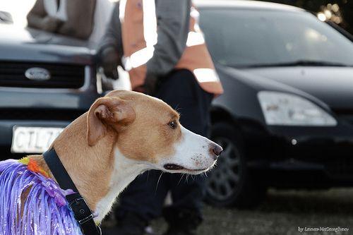 Dog In Purple 01