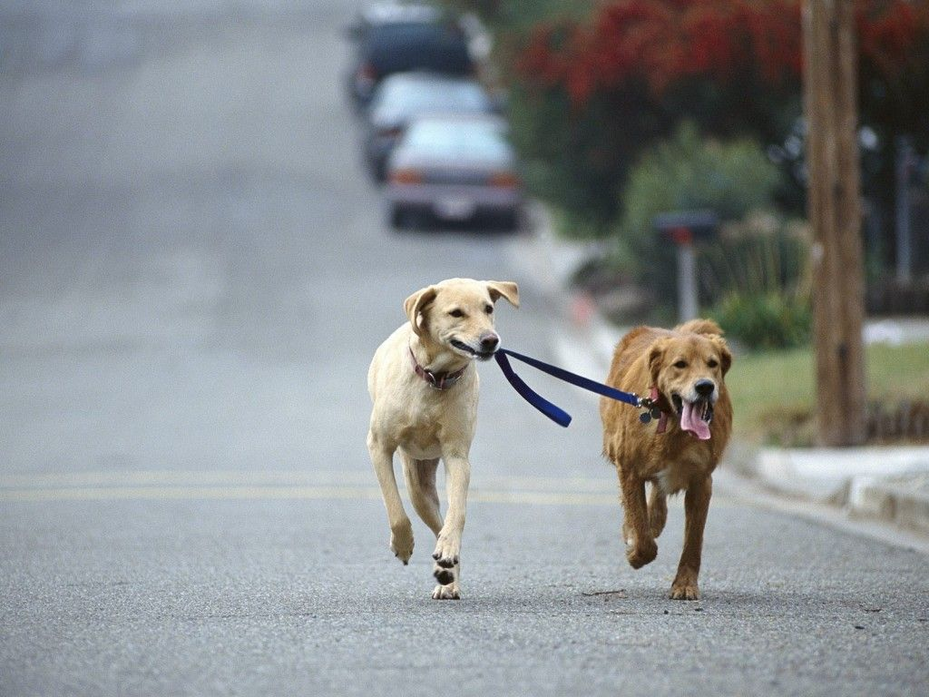 Walking your dog could save your life. Read about it here!   #Pets