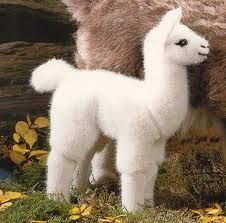 Baby Lama Cute Animals Cute Animal Pictures Cute Baby Animals