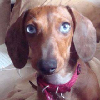 Our Weenie Baby Weenie Dogs Dachshund Love Sweet Animals