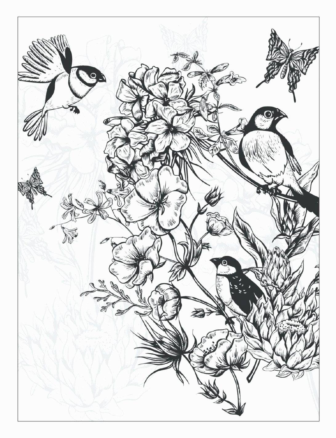 Primavera Flores Dibujos Para Colorear De Inspiracion Para Colorear Dibujos Para Color En 2020 Dibujos Para Colorear Paginas Para Colorear De Flores Libro De Colores