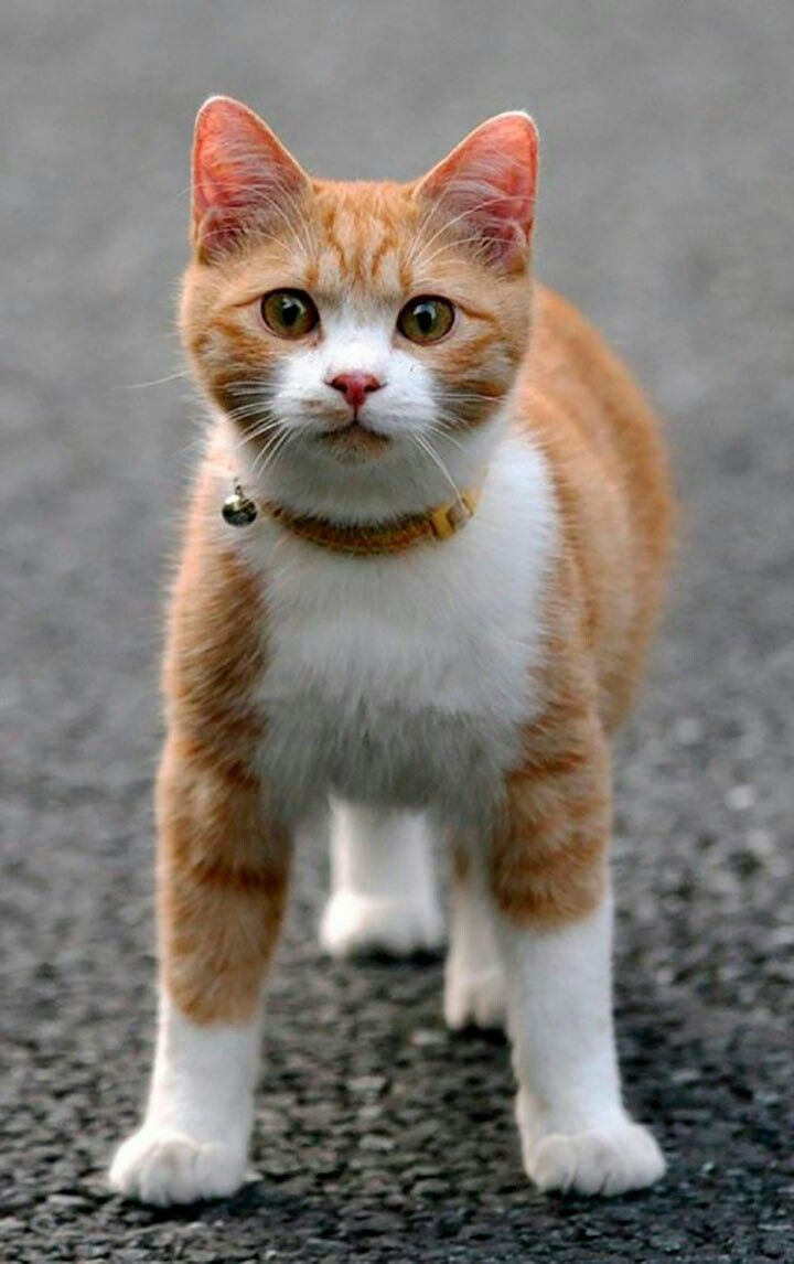 Pin By Paula Kroes On Adorable Cats Beautiful Cats Cute Cats Crazy Cats