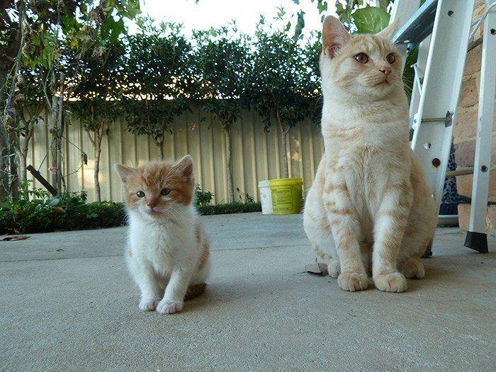 50 кошек и их маленькие копии | Кошки и котята, Животные ...