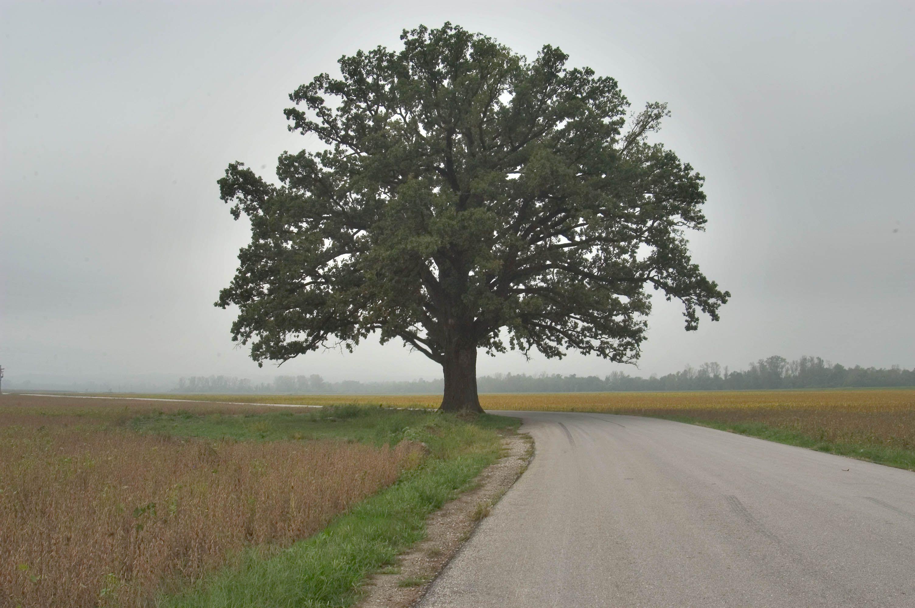 Одиноко стоящее дерево фото