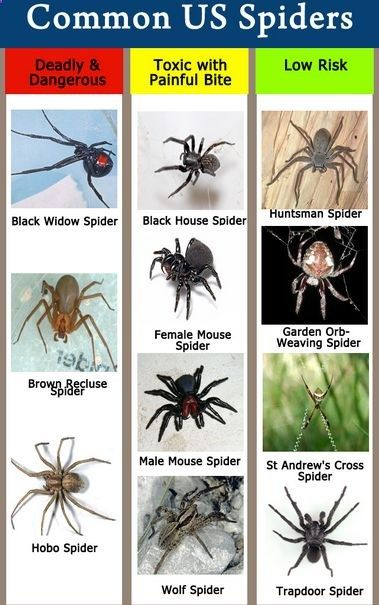 How To Identify Spiders Bites And Treat them Guide For Prepping