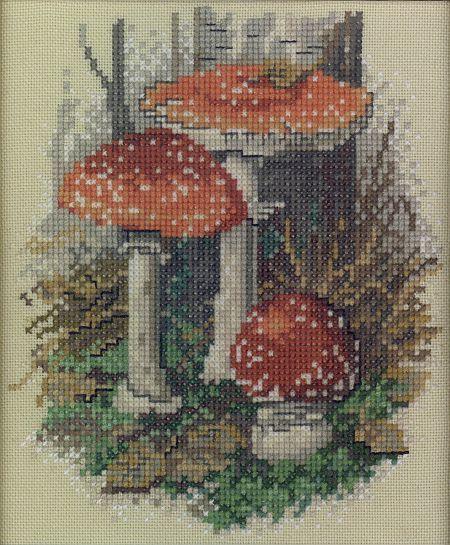 mushrooms!!!!