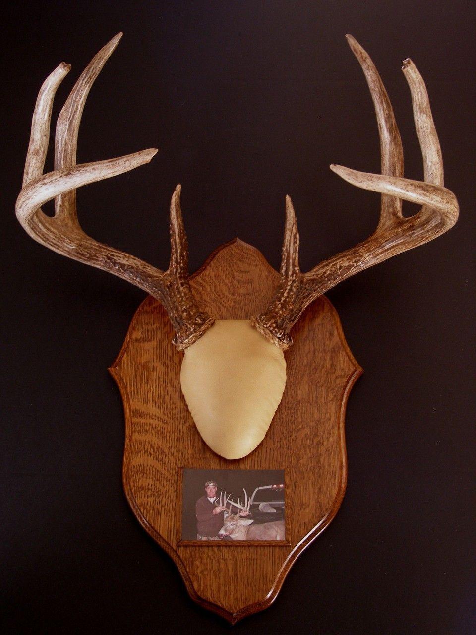 Antler mount kit traditions deer in 2020 antler mount