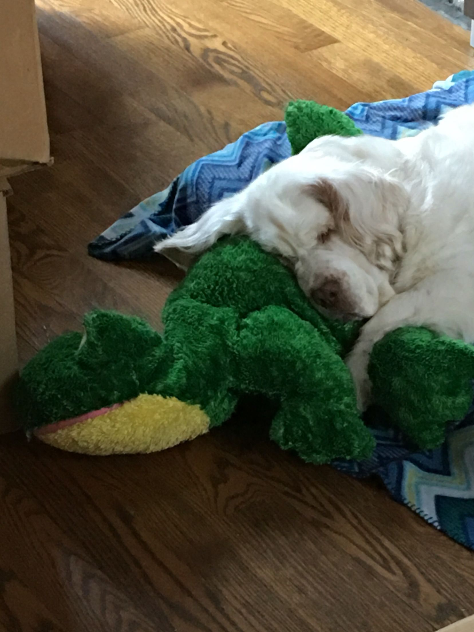 A girl and her frog