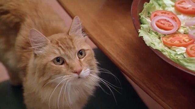 Paulie (1998 Cinema Cats Cats, Cat whisperer, F2