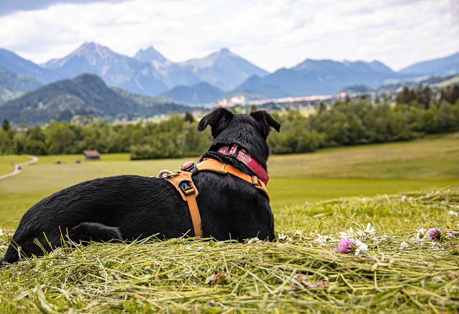 Der Schutzengelweg In Schwangau Die Bergfreaks Urlaub Mit Hund In 2020 Urlaub Mit Hund Schwan Berg