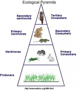 Ecological Energy Pyramid Trophic Levels For The Ecosystem To Function Energy Must Be Available And It Must B Energy Pyramid Ecological Pyramid Trophic Level