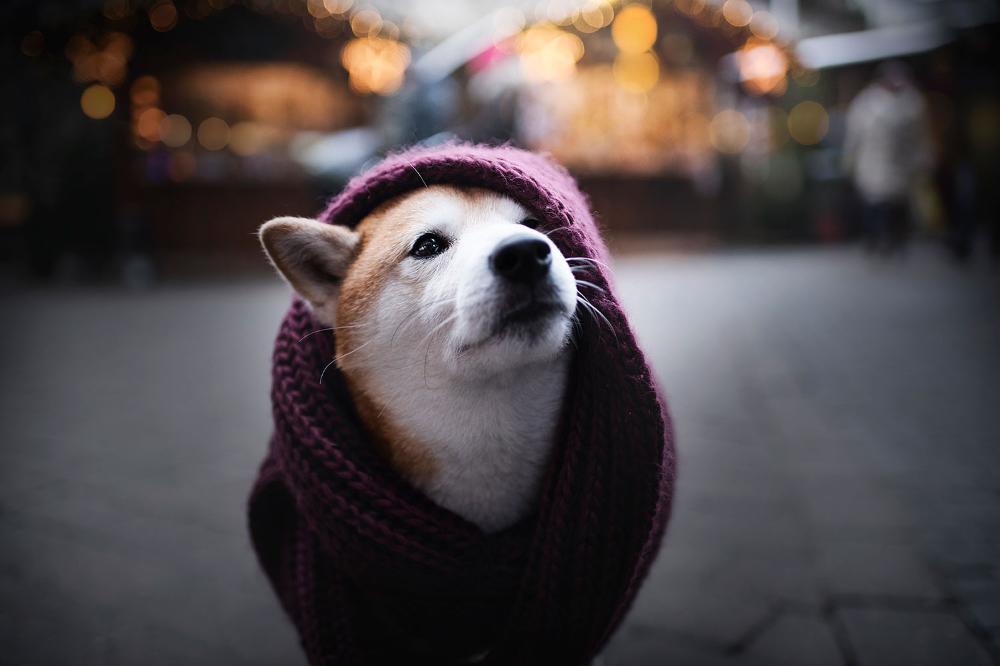 Hundefotografie Osterreich Fotoprojekt Adventuredogs