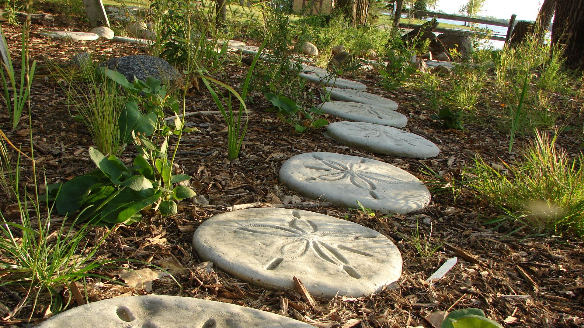sand dollar stepping stones at my parents by the lake | Pins ...