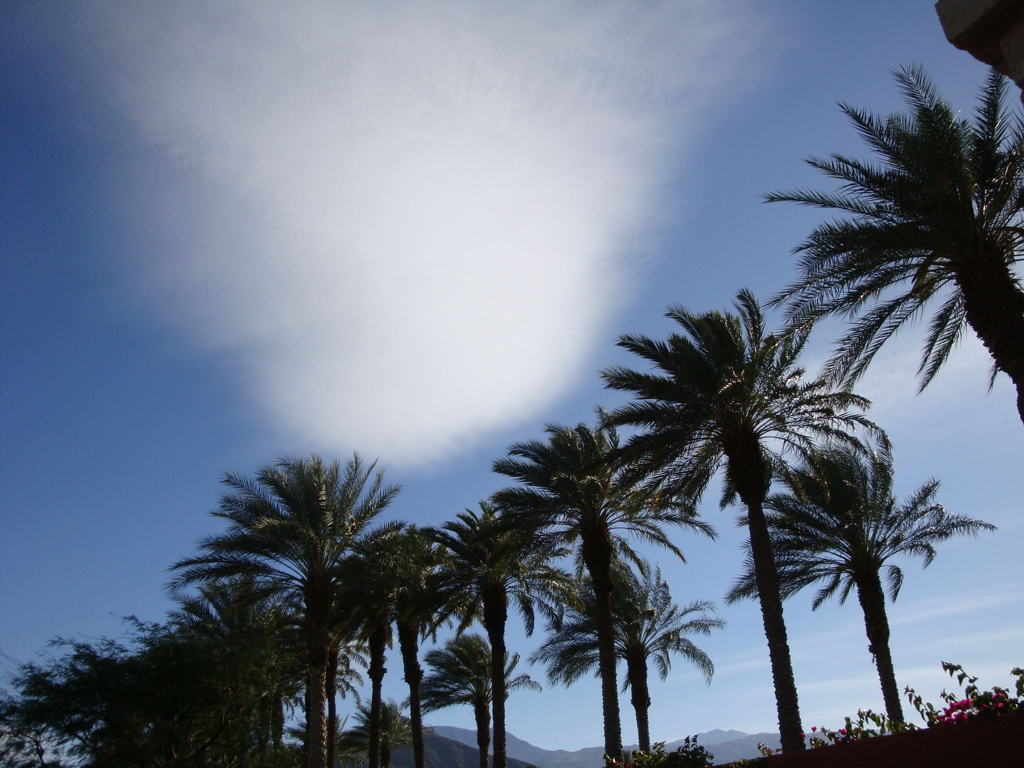 Cloud and palms clouds outdoor plants