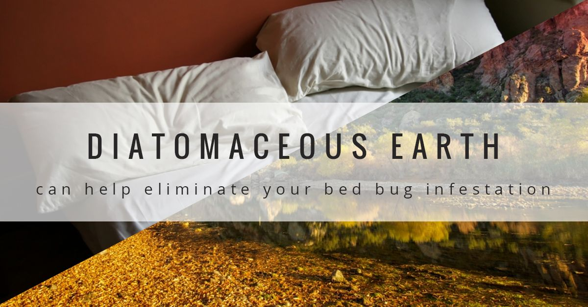 How to Use Diatomaceous Earth to Kill Bed Bugs Bed bugs