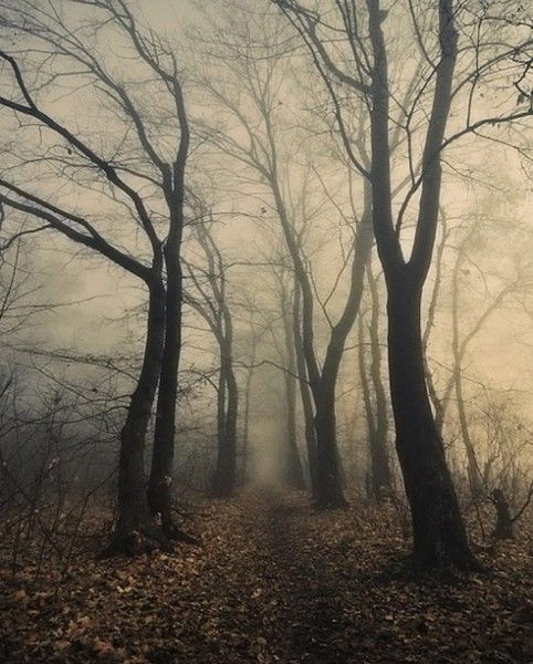 Image result for leafless trees in mist