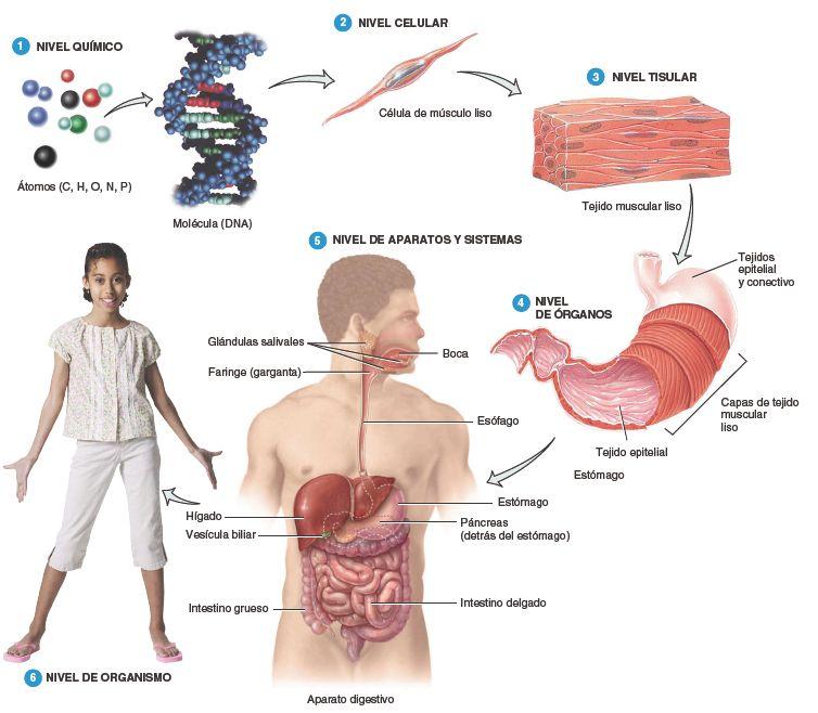 Principios de Anatomía y Fisiología | ANATOMIA | Pinterest ...