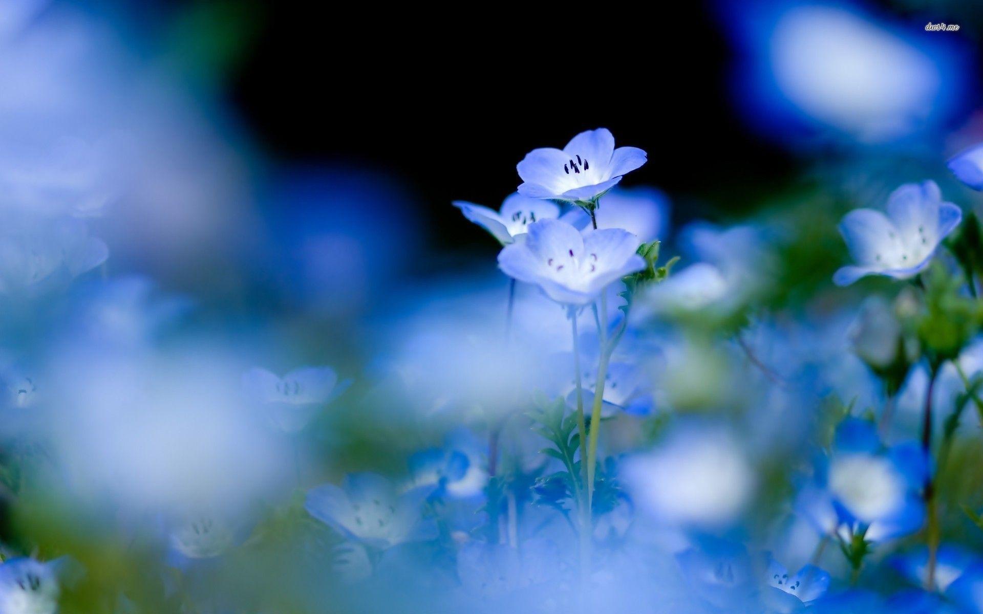 Small blue flowers flower wallpaper flowers pinterest flower small blue flowers flower wallpaper izmirmasajfo