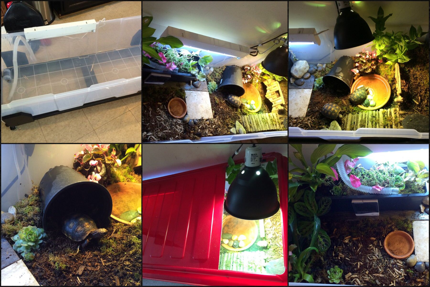 Homemade indoor tortoise enclosure large christmas tree for Blaine storage