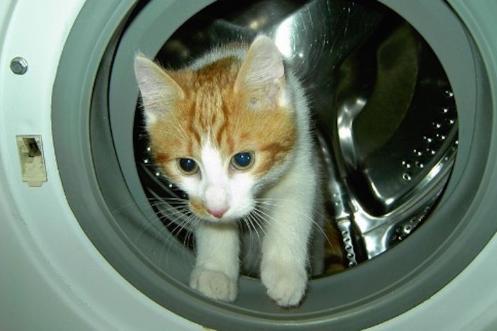Tough kitty survives scalding hot spin in a washing machine