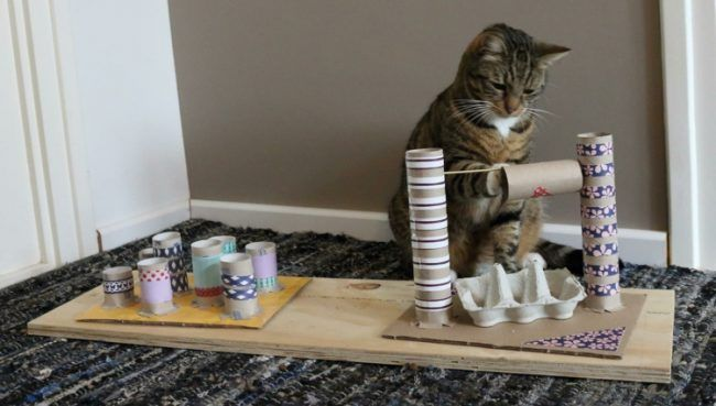Toilettenpapierrollen-eierkartons-fummelbrett-katze