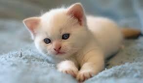 Resultado de imagen para gatitos tiernos