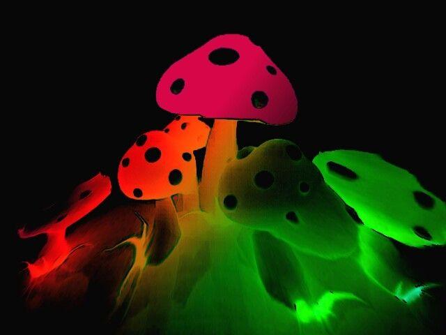 Trippy Mushrooms Wallpaper Mushroom Wallpaper Trippy Mushrooms Neon Wallpaper