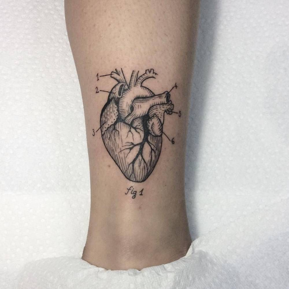 Scientific illustrative of an anatomical heart tattoo on the ankle ...