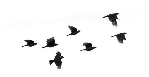 Flock Of Birds Fotografi Perjalanan Fotografi Hewan