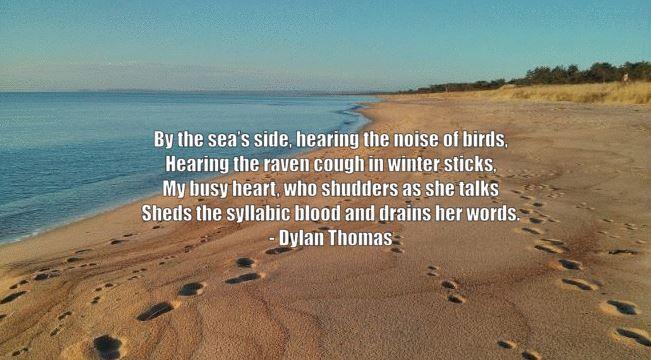 Noise of Birds