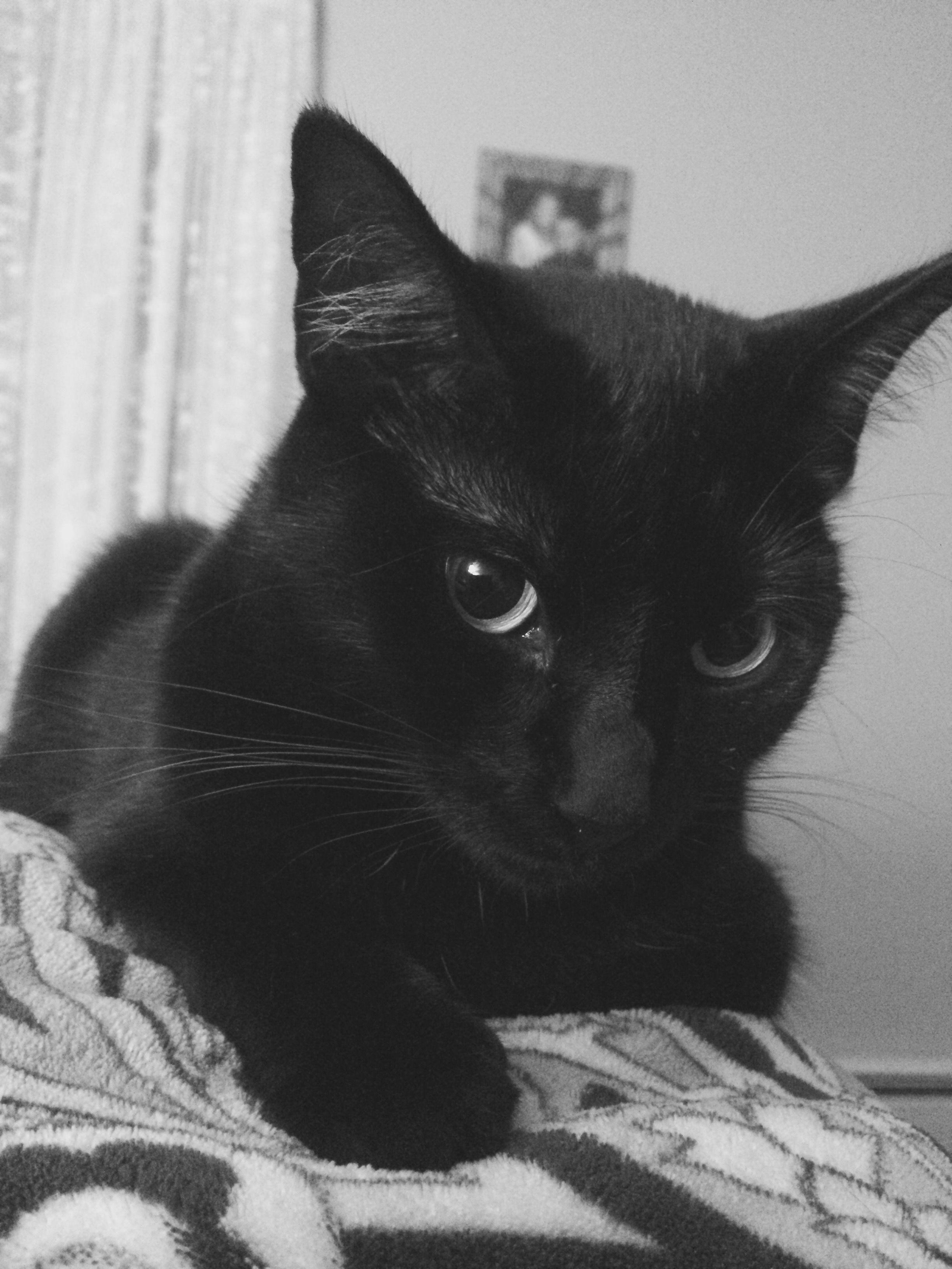 Pin by Cassie Trendell on My Cassie baby Cat allergies