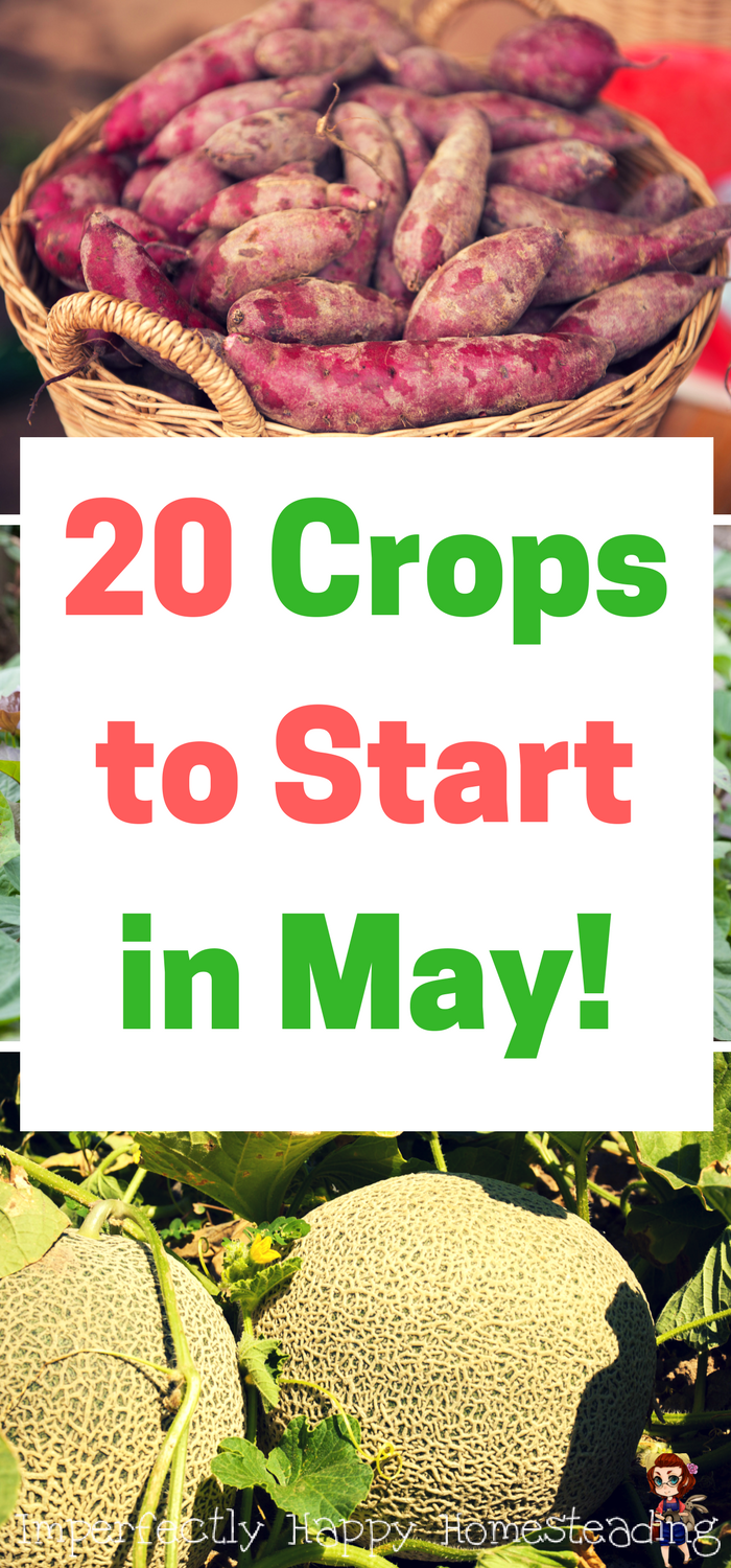 20 crops to start in may for your backyard garden or homestead