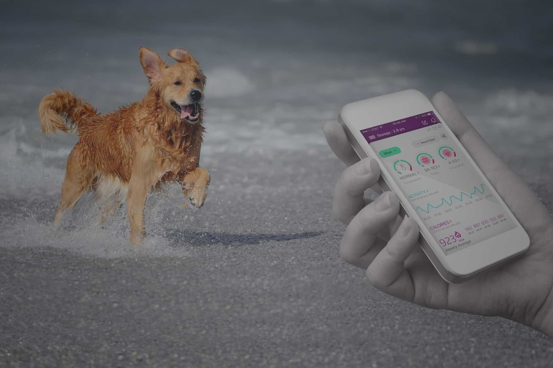 Choose a Health Monitoring Service Plan for PetPace's