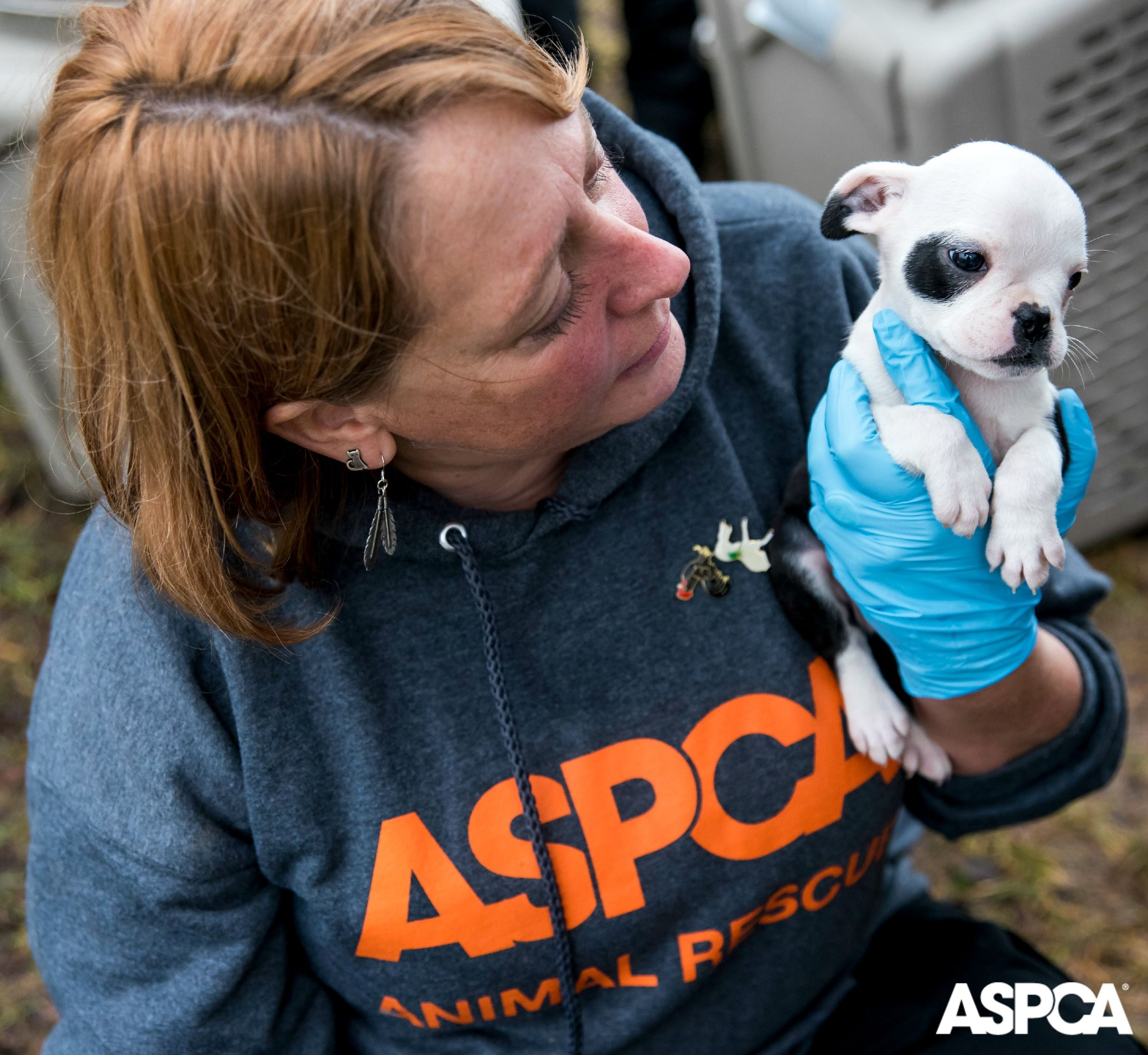 Update View New Video Footage From Our Michigan Puppy Mill Rescue Puppy Mills Pet Store Puppies Aspca